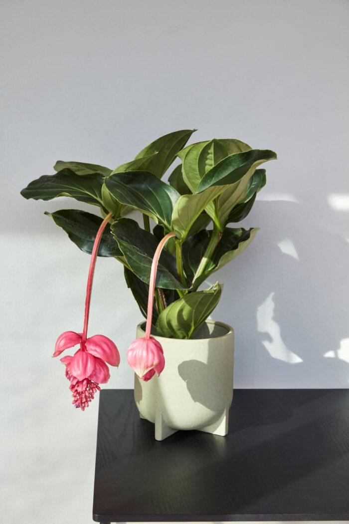 Květináč Mint sada 2 ks